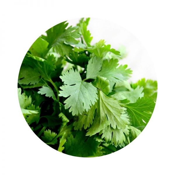 para qué sirve el cilantro