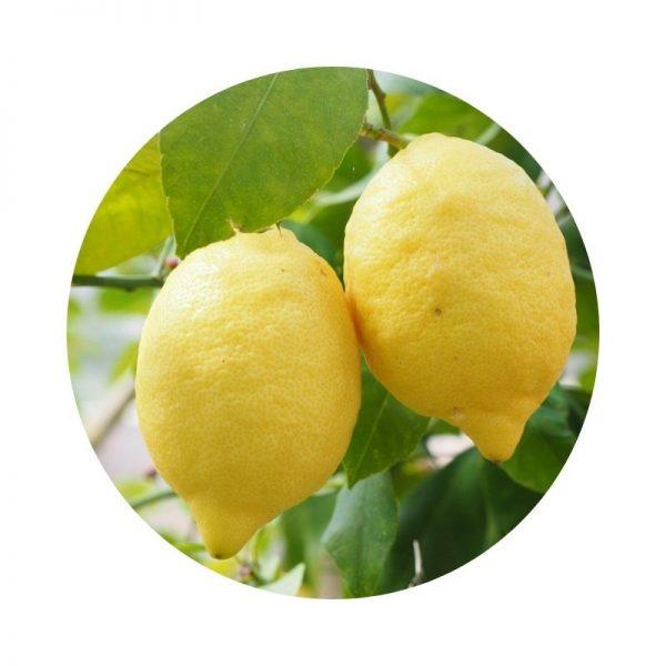 para qué sirve el limón