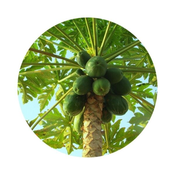 para qué sirve la papaya
